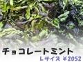 ハーブティー【チョコレートミント】リーフL 北海道より減農薬有機肥料の国産ハーブのハーブティーをお届けします