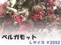 ハーブティー【ベルガモット(花)】リーフL 北海道より減農薬有機肥料の国産ハーブのハーブティーをお届けします