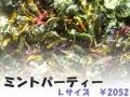 ハーブティー【ミントパーティー】リーフL 北海道より減農薬有機肥料の国産ハーブのハーブティーをお届けします