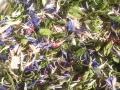 ハーブティー【朝のハーブティー】リーフM 北海道より減農薬有機肥料の国産ハーブのハーブティーをお届けします