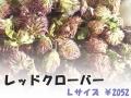 ハーブティー【レッドクローバー】リーフL 北海道より減農薬有機肥料の国産ハーブのハーブティーをお届けします