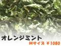 ハーブティー【オレンジミント】リーフM 北海道より減農薬有機肥料の国産ハーブのハーブティーをお届けします