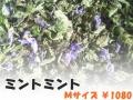 ハーブティー【ミントミント】リーフM 北海道より減農薬有機肥料の国産ハーブのハーブティーをお届けします