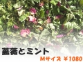ハーブティー【薔薇とミント】リーフM 北海道より減農薬有機肥料の国産ハーブのハーブティーをお届けします