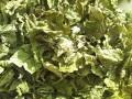 ハーブティー【レモンバーム】リーフL 北海道より減農薬有機肥料の国産ハーブのハーブティーをお届けします
