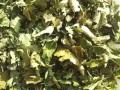ハーブティー【ブラックベリーリーフ】リーフL デトックス・ハーブ 北海道の有機ハーブ専門農園より新鮮国産ハーブティーお届けします