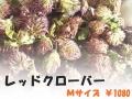 ハーブティー【レッドクローバー】リーフM 北海道より減農薬有機肥料の国産ハーブのハーブティーをお届けします
