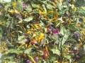 ハーブティー【ハッピーデイズ】リーフL 北海道より減農薬有機肥料の国産ハーブのハーブティーをお届けします