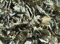 ハーブティー【レモンバジル】リーフL 北海道より減農薬有機肥料の国産ハーブのハーブティーをお届けします