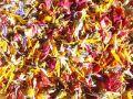 ハーブティー【ビューティーアップ】リーフL 北海道より減農薬有機肥料の国産ハーブのハーブティーをお届けします