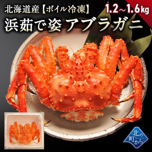 アブラガニ オホーツク産 1.2kg~1.6kg 【浜茹で急速冷凍 姿】 1尾 甘みが強く食感が良い新鮮なアブラガニ! 蟹 あぶらがに カニ かに