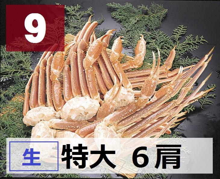 9) 極上生本ズワイガニ 特大サイズ 6肩 約2.1kg