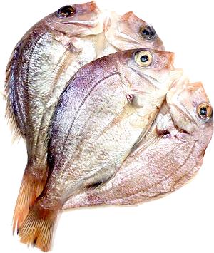 花鯛(チダイ) 大  5枚+1枚サービス (長崎県産)