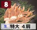 8) 極上生本ズワイガニ 特大サイズ 4肩 約1.5kg