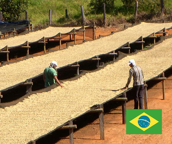 ブラジル-シーマ農園