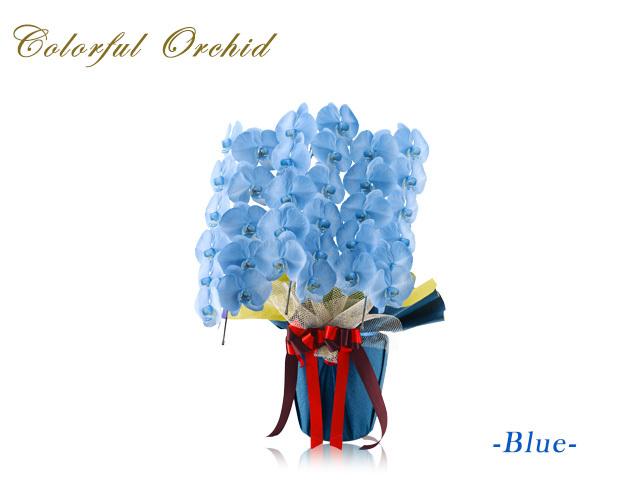 カラフル胡蝶蘭3本立30輪(ブルー)