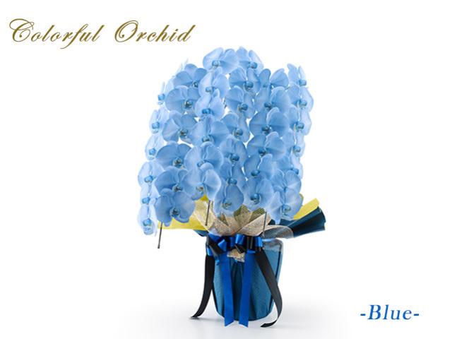 カラフル大輪胡蝶蘭ブルー3本立