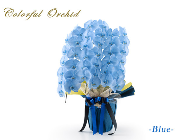 カラフル胡蝶蘭3本立(ブルー)