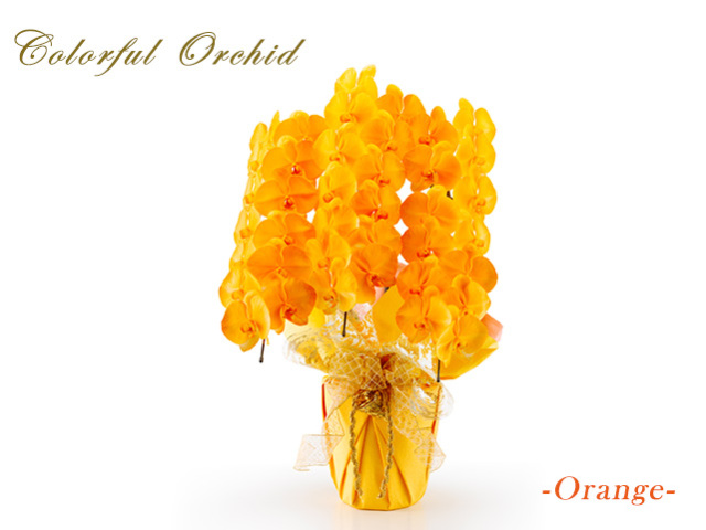 カラフル大輪胡蝶蘭オレンジ3本立