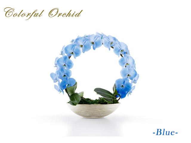 カラフルリング胡蝶蘭(ブルー)