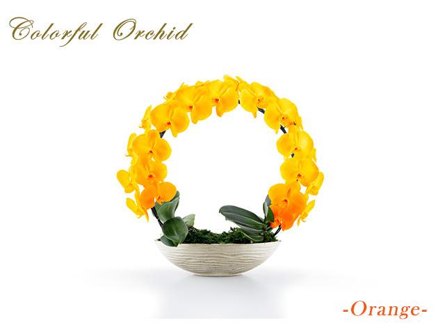カラフルリング胡蝶蘭(オレンジ)