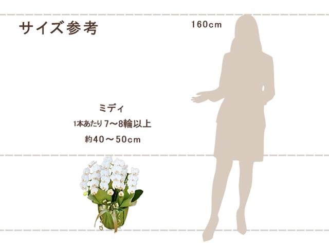 ミディ胡蝶蘭3本立(白)