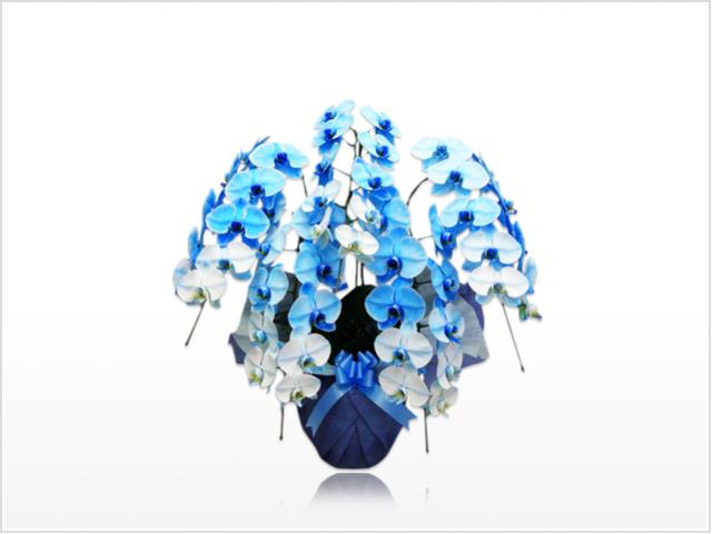 スタンダード大輪胡蝶蘭ブルー5本立