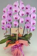 胡蝶蘭大輪3本立ちピンク ガラスの感謝状セット