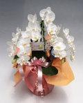 ミディ胡蝶蘭アマビリス3本立ち以上 ガラスの感謝状付