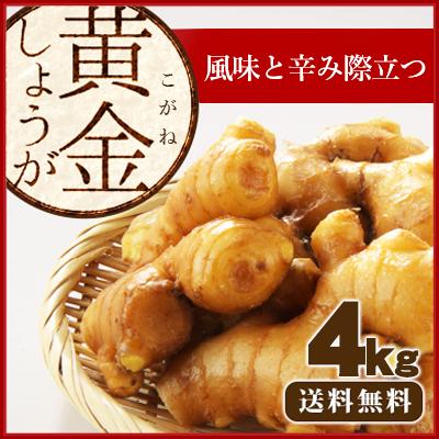 黄金生姜4kg