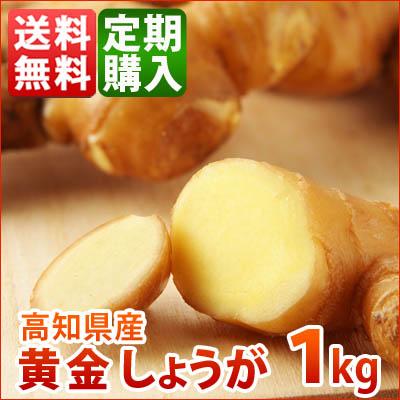 定期購入【送料無料】 高知県産 黄金生姜 1kg
