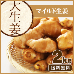 【送料無料】高知県産 大生姜(おおしょうが)  2 kg ≪ 国産しょうが専門 坂田信夫商店のこだわりの大しょうが≫