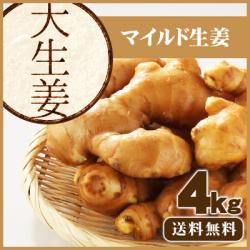 【送料無料】高知県産 大生姜(おおしょうが)  4kg ≪ 国産しょうが専門 坂田信夫商店のこだわりの大しょうが≫
