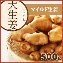高知県産 大生姜(おおしょうが) 500 g