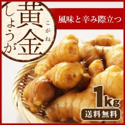 【送料無料】高知県産 黄金生姜(こがねしょうが) 1kg  /食用のため種生姜としてのご利用はできません