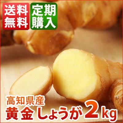 高知産黄金生姜2kg 定期購入