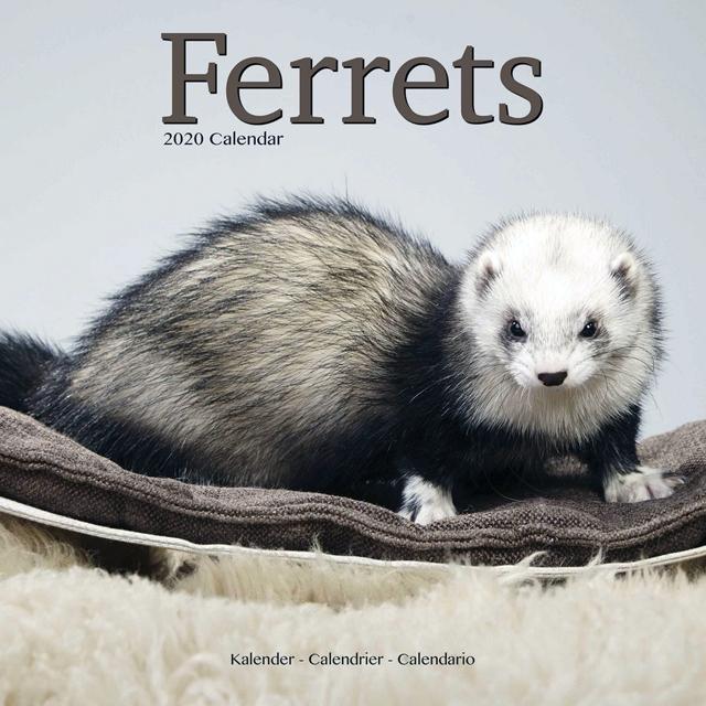 Ferrts 2019 Calendar 「輸入品」