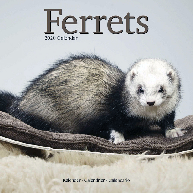 Ferrts 2020 Calendar 「輸入品」
