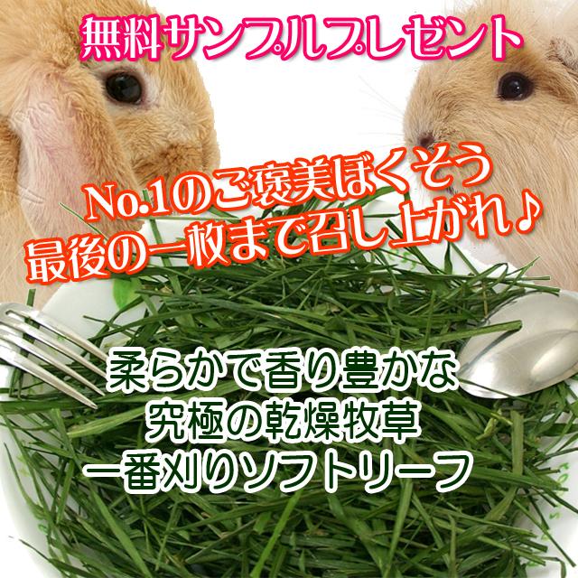 【無料プレゼント】究極の乾燥牧草  チモシー  一番刈りソフトリーフ お試し品