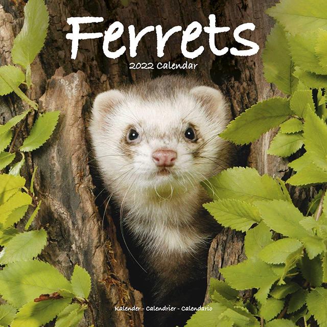 Ferrts 2022 Calendar 「輸入品」