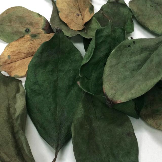 【季節限定】無添加・無着色 国産柿の葉 10g