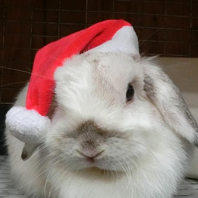 【10,000円以上でプレゼント】サンタハットでハッピークリスマス★