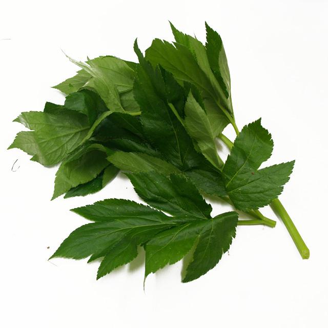 八丈島産 生あしたばの葉と茎