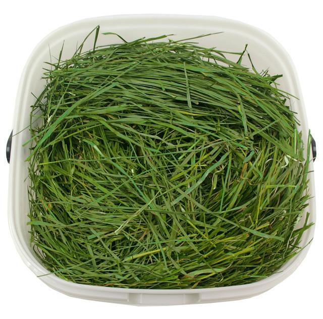 究極の乾燥牧草 イタリアンライグラス 300g (密閉パッカー付き)