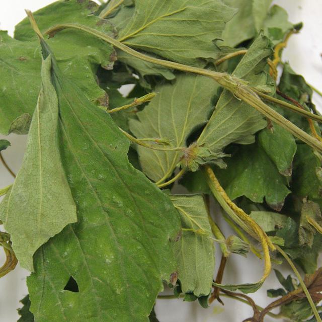 無添加・無着色 国産いちごの葉と茎(とちおとめ)