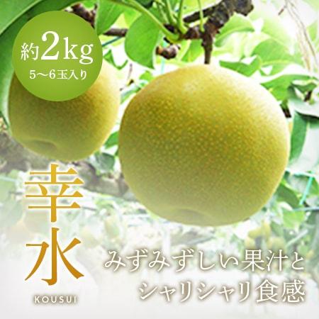 【幸水】5~6玉入り(秀)