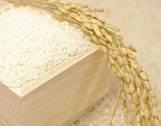 環境こだわり米