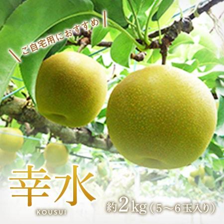 【ご自宅用】幸水 5~6玉入り(優)
