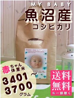 出産内祝い体重米 MY BABY魚沼:3401~3700g
