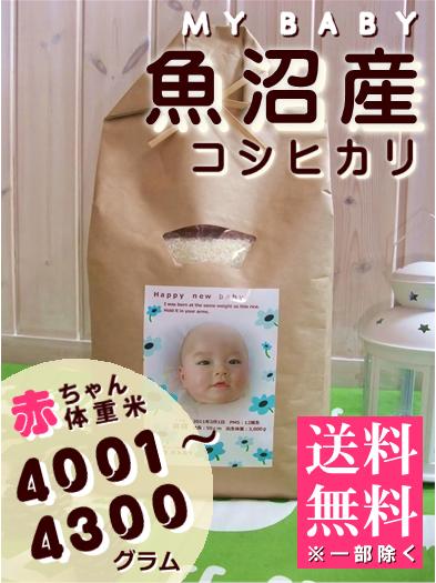 出産内祝い体重米 MY BABY魚沼:4001~4300g